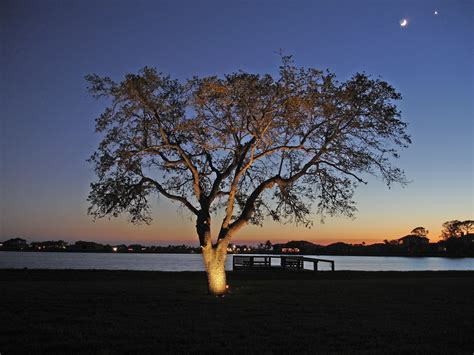 lighting in trees tree lighting archives outdoor lighting perspectives of