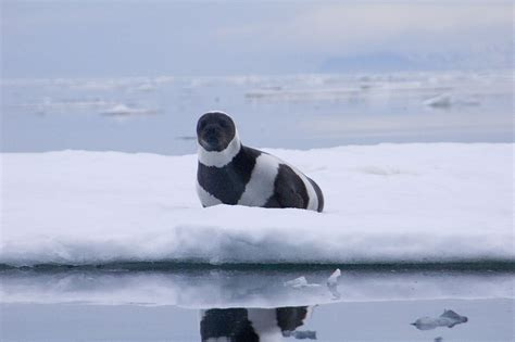 seal ribbon ribbon seal