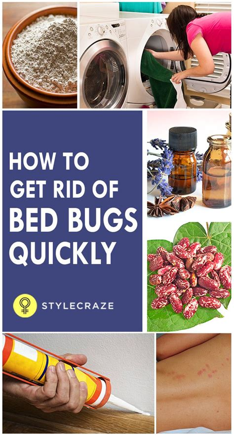 Get Rid Of Bed Bugs Fast by How To Get Rid Of Bed Bugs Quickly Hacks