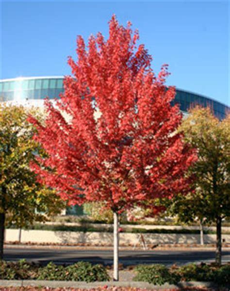 maple tree colorado living conditions in colorado