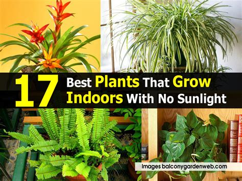 kitchen plants that don t need sunlight 100 homelife top 15 indoor plants 100 houseplants