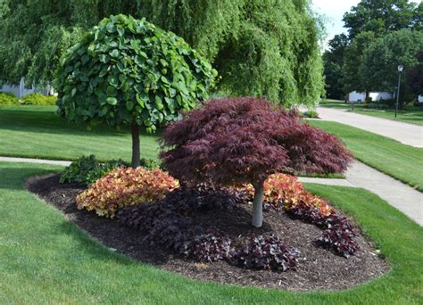 maple tree small yard 23 landscaping ideas with photos
