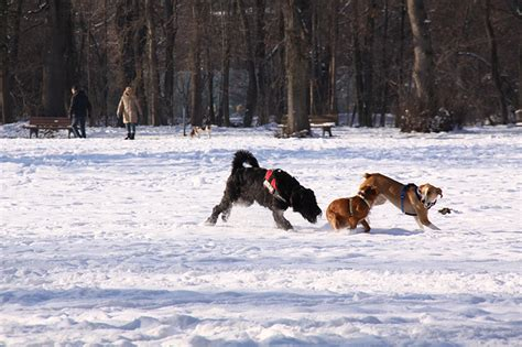 Englischer Garten München Parkmöglichkeiten by Hundewiese K 246 Rbchen 174