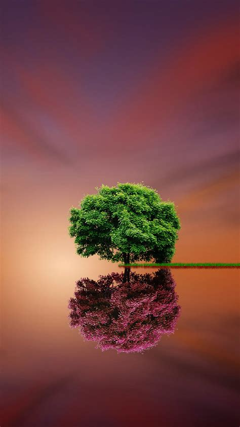 Dubai Hd Pic mobile hd wallpapers tree reflection green volet