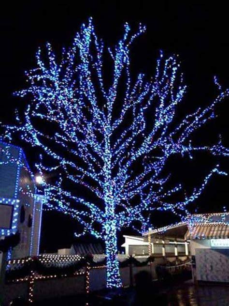 best way to put lights on outdoor trees 28 images how