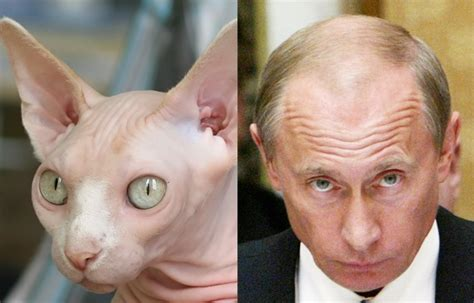 what looks with a laugh putin looks like a saboteur365