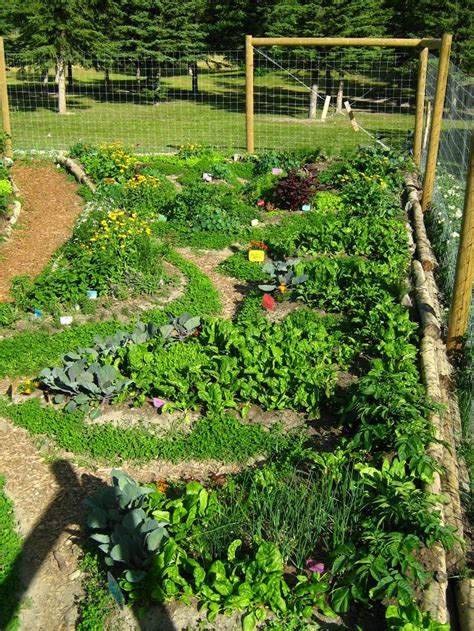 permaculture garden layout best 25 permaculture design ideas on