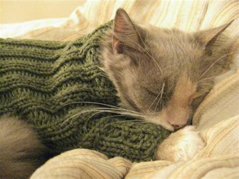 cat knitting sweater for a toasty cat knitting