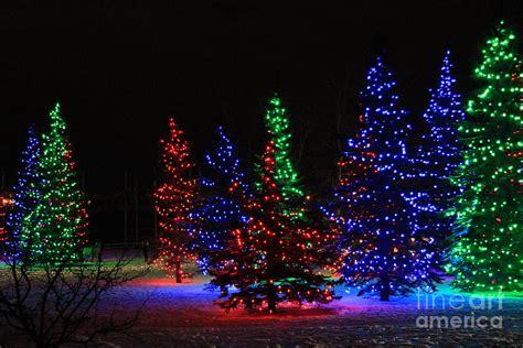 christmastree lights tree lights photograph by helen bobis