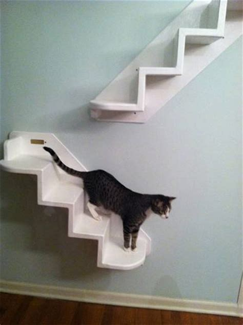 cat step step cat stairs for the wall
