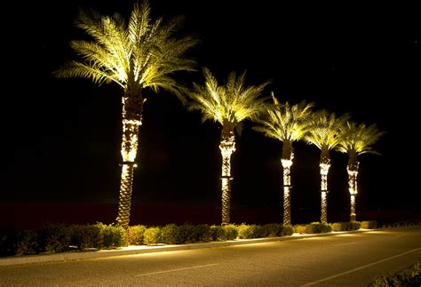 lighting in trees stella led palm tree light bradley lighting