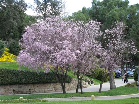 the world 180 s tree species 2012 03