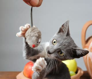 images cats complete guide to caring for cats cat breed information