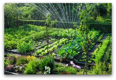 watering vegetable garden with sprinklers vegetable garden irrigation how much and how often