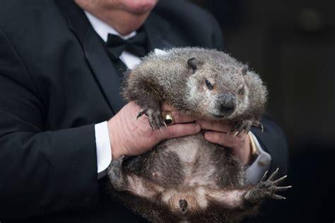 groundhog day 2016 zoo si zoo groundhog day crafts
