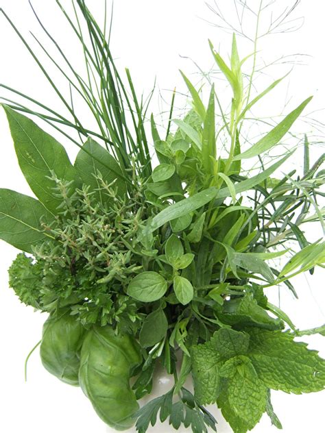 aromatiques pepinierelelann p 233 pini 232 res vente d arbustes plantes vertes en pot et plantes fleuries