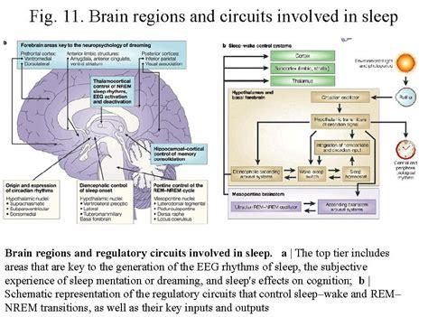 Sleep Wake Cycle by Choking During Sleep Coughing Sleep Wake Cycle Brain