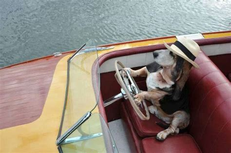 Boat Driving Dog by The Shipwreck Restaurant And The Antique And Classic Boat