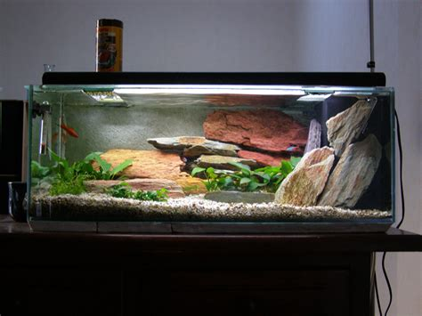 accessoire d 233 co aquarium pas cher encombrement place