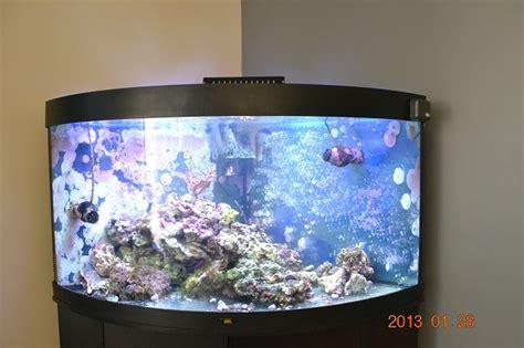 aquariophilie forum recifal aquarium eau de mer forum redseamax 130 250 et 500 aquarium