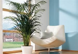 Pflanzen Die Wenig Licht Brauchen Heißen : zimmerpflanzen richtig pflegen tipps von obi ~ Markanthonyermac.com Haus und Dekorationen