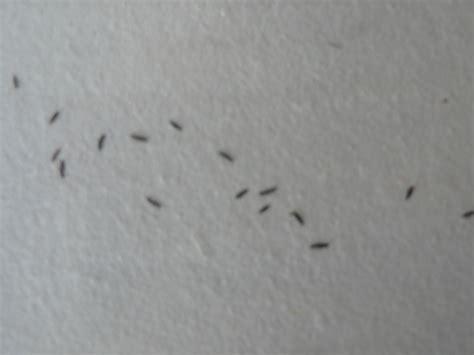 de plusieurs centaines d insectes