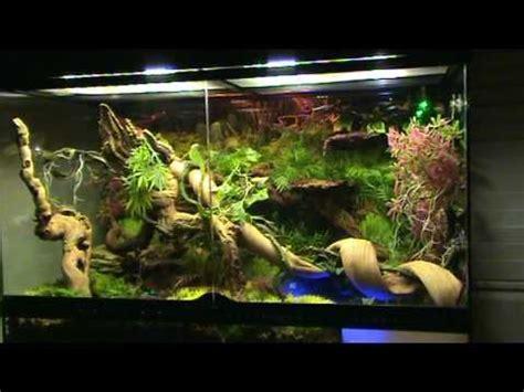 100 axolotl tank yacht club 69 best axolotl images on aquarium