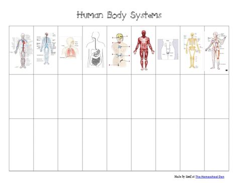 Human Body Systems Chartpdf  Google Drive  Printables Of All Kinds  Pinterest  D, Google