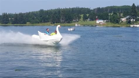 Swan Boats Videos by Video Couple Soupes Up Swan Boat With Sea Doo Parts The