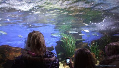 nausicaa aquarium boulogne sur mer the