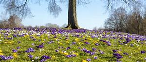 Garten Was Tun Im März : der garten im m rz garten europa ~ Markanthonyermac.com Haus und Dekorationen
