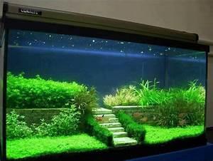 Coole Aquarium Deko : great aquascaping fish tanks terrariums fairy gardens pinterest aquariums fish tanks ~ Markanthonyermac.com Haus und Dekorationen