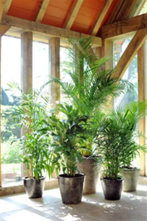 cultiver un arbre en pot le magazine gamm vert