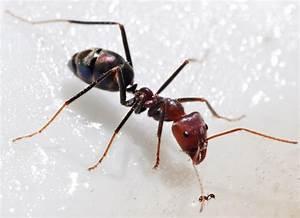 Hilft Mehl Gegen Ameisen : dieser geniale trick hilft gegen ameisen im haus so r ckst du diesen unerw nschten g sten zu ~ Whattoseeinmadrid.com Haus und Dekorationen