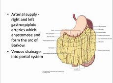 Omentum – anatomy, pathological conditions and surgical