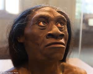 hobbit s 15 000 year skull has no similarities to our sapien species daily mail