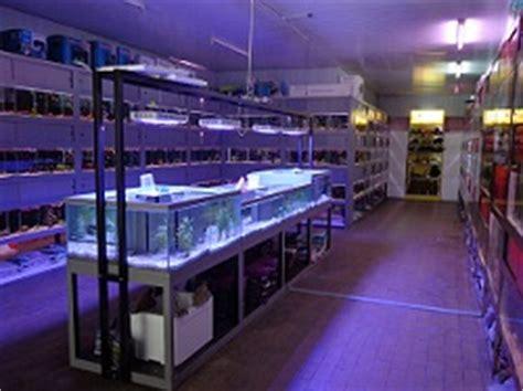 l 39 aquarium d 39 anzin votre partenaire aquariophile