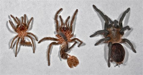 a molt bad and an biology lesson things biological