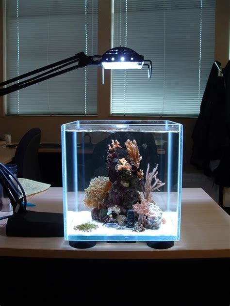 small lighting aquarium design image photos pictures ideas high resolution images small