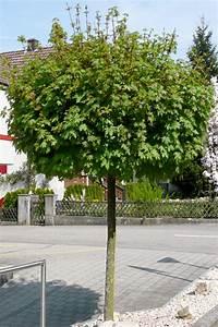 Kleine Bäume Für Den Garten : kleinkronige b ume hauenstein rafz ~ Markanthonyermac.com Haus und Dekorationen