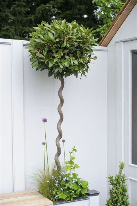 25 best ideas about small trees on flowering trees small garden trees and