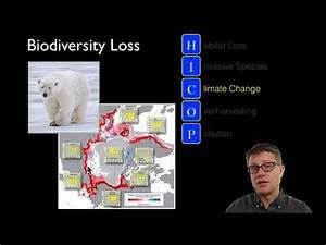 Scientiflix - Loss of Biodiversity Paul Andersen explains ...