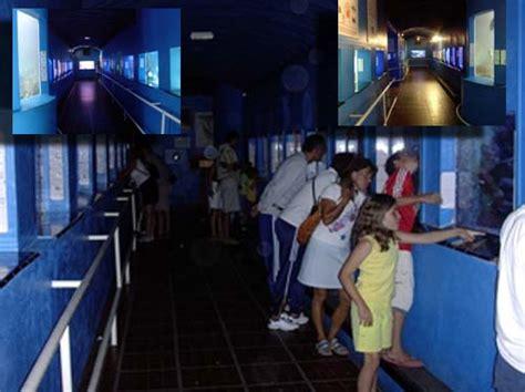 visite de l aquarium de banyuls sur mer 66 aquarium r 233 cifal aquarium marin aquarium eau de