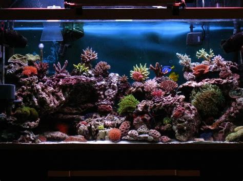 17 best images about fish tank on saltwater fish tanks 75 gallon aquarium and