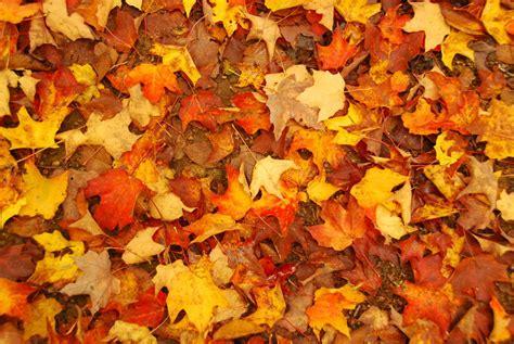couleurs d automne au qu 233 bec blogtantine