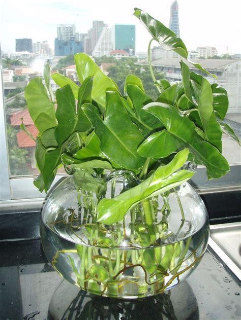 plante aquatique jetez vous 224 l eau en 47 photos archzine fr