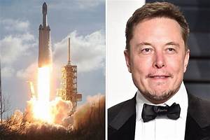 SpaceX Elon Musk's brain implant plans REVEALED | Daily Star