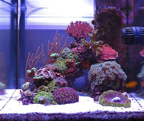 sushi 2010 featured nano reefs featured aquariums monthly featured nano reef aquarium