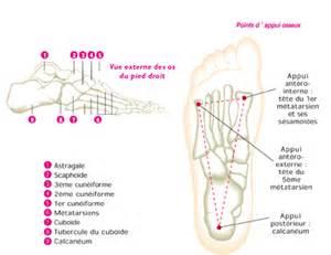 anatomie et probleme du pied