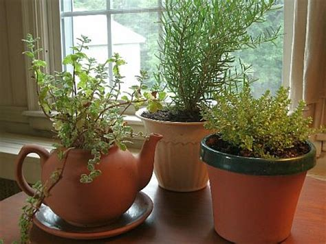 The Truth About Indoor Herb Gardening